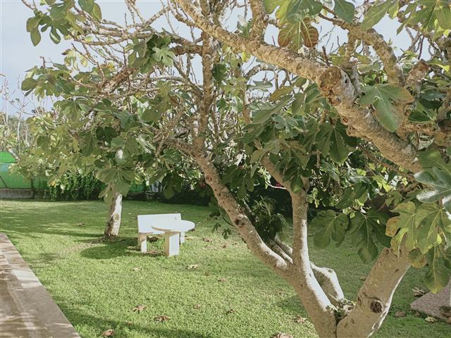 bernard lawson (1) (Small)