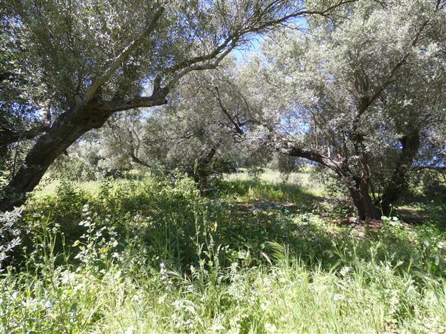 finca los olivos (39)