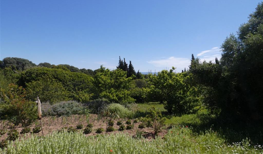 finca los olivos (48) (Medium)