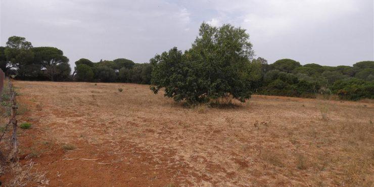 Parcela Oliva